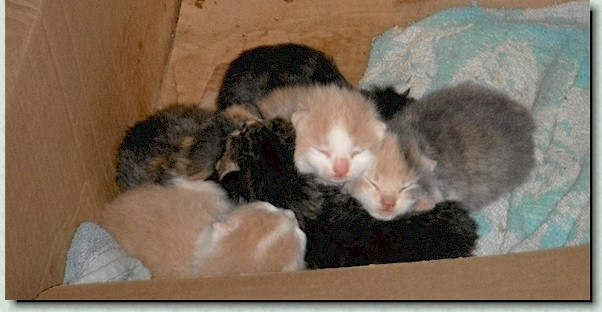 6 kitties ready for adoption lat July to early August